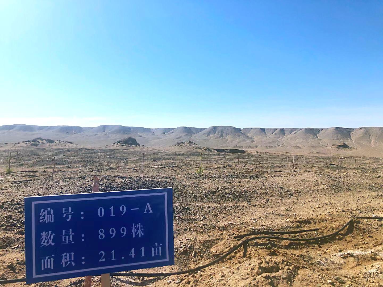 """静看沙漠变绿洲   万亩""""艺博胡杨林""""公益项目第一期工程验收完成"""